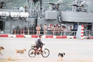 นายทหารเกษียณอายุราชการ อุทิศตนเลี้ยงสุนัขจรจัดในค่าย