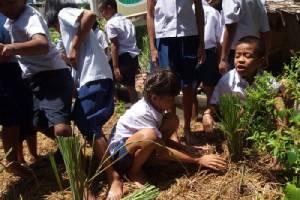 มิติใหม่โรงเรียนไทย ครู-นักเรียน ปลูกผักอินทรีย์ กินดีเพื่อสุขภาพ