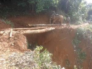 ชาวท่าสองยางใช้ช้างลากไม้ซ่อมถนนเอง หลังถูกตัดขาดจากโลกภายนอก