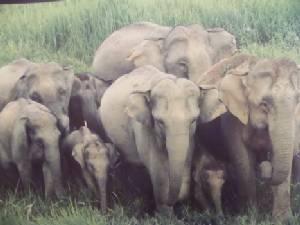 CITES มุกดาหารติวเข้ม กม.หน่วยงานข้างเคียงร่วมอนุรักษ์สัตว์ป่า-พืชหายาก
