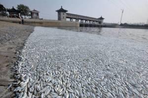 ผวา! ปลาตายเกลื่อนแม่น้ำเทียนจิน จนท.ปัดไม่เกี่ยวสารเคมีพิษจากเหตุระเบิด
