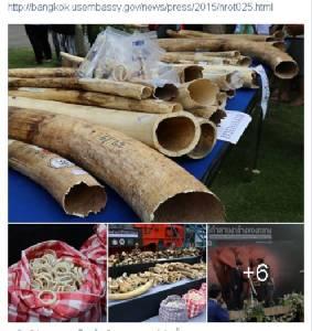 """""""มะกัน"""" ชมเชยไทยทำลายงาช้าง 2.1 ตัน ขจัดลอบค้าสัตว์ป่า"""