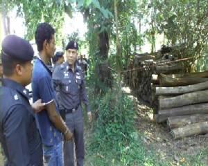รอง ผบ.ตร.โชว์จับคนร้ายปล้นไม้พะยูงได้เพิ่มอีก 2 คน