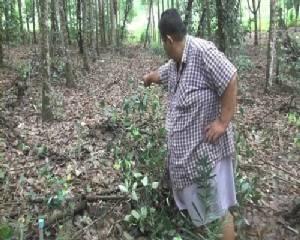 คนร้ายขโมยเสาปลูกพริกไทยที่เป็นไม้กันเกราหายไปกว่า 300 ต้น มูลค่ากว่า 1 แสนบาท