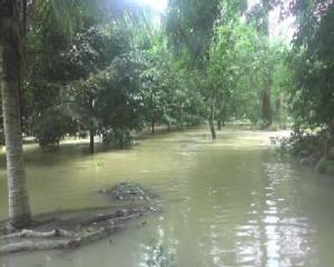 น้ำป่าไหลหลากเข้าท่วมสวนผลไม้กว่า 50 ไร่ ถนน บ้านเรือนจม