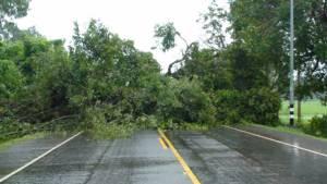 """พายุฝน """"หว่ามก๋อ"""" ถล่มศรีสะเกษ ต้นพะยอมยักษ์โค่นขวางถนน-ชุบชีวิตนาข้าวรอดตาย"""