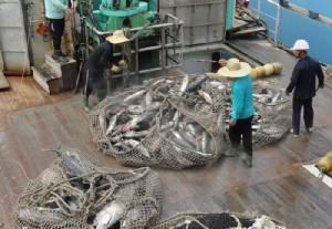 ผ่านไป 40 ปีอาหารทะเลถูกพลาญไปแล้วครึ่งโลก