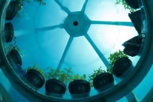 อิตาลีโชว์เทคโนโลยีปลูกกะเพราใต้น้ำ
