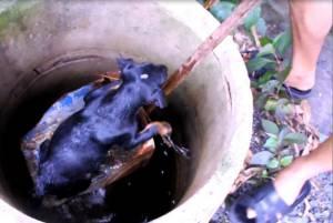 นายหล่อมาก! หนุ่มเมืองช้างช่วยชีวิตสองหมาน้อยพลัดตกบ่อน้ำปลอดภัย (ชมคลิป)