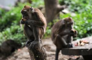 Sneezing monkey, 'walking' fish found in Himalayas: WWF