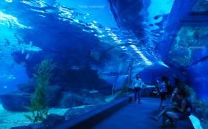 """ซีไลฟ์ แบงคอก โอเชี่ยน เวิร์ล ชวนสัมผัส """"ฉลาม"""" อย่างใกล้ชิด"""