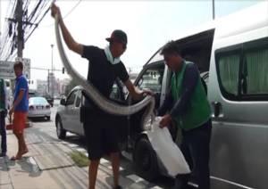 หนุ่มขับรถตู้แทบช็อกเจองูเหลือมขนาดใหญ่ขดอยู่ในห้องเครื่องยนต์
