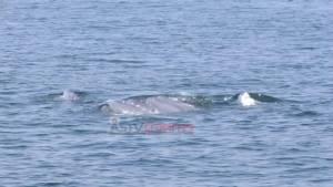 """นักท่องเที่ยวเริ่มแห่ชม """"วาฬบรูด้า"""" ในทะเลเมืองเพชรบุรี"""