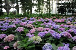 """ชมดอกไม้สวยเพลินตา ดูปราสาทสวยเพลินใจ ในเมืองปราสาทสองยุค ที่ """"บุรีรัมย์"""""""