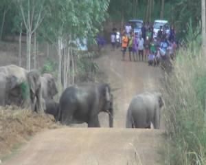 จนท.คุมเข้มความปลอดภัย นร. หลังโขลงช้างป่าประชิดหมู่บ้าน