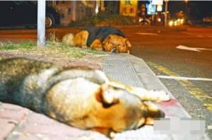 เพื่อนไม่ทิ้งเพื่อน สุนัขถูกรถชนตายในฮ่องกง เพื่อนร่วมสายพันธุ์เฝ้าไม่ห่างข้ามวันข้ามคืน