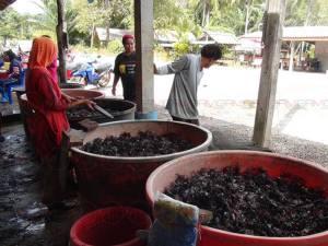 ชาวประมงสตูลแห่จับปูเปี้ยวตามป่าชายเลนในช่วงค่ำ ก่อนส่งขายต่อสร้างรายได้งาม