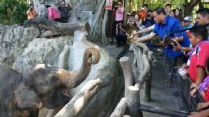 """สวนสัตว์เชียงใหม่จัดอวยพรวันเกิด """"ช้างไชโย"""" มาสคอตเอเชียนเกมส์ครบ 17 ปี(ชมคลิป)"""