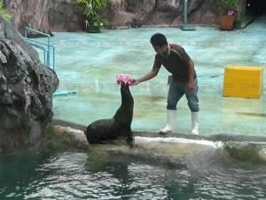 """พิพิธภัณฑ์สัตว์น้ำราชมงคลตรังจัดโชว์ """"แมวน้ำลอยกระทง"""" ดึงนักท่องเที่ยวช่วงเทศกาลฯ (ชมคลิป)"""