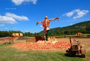 """เรียนรู้วิถีเกษตร ประเพณีถิ่นอีสาน  ชมดอกไม้งาม ที่ """"จิม ทอมป์สัน ฟาร์ม"""""""