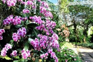 ตระการตากล้วยไม้กว่า 10,000 ต้น ที่ อุทยานหลวงราชพฤกษ์ จ.เชียงใหม่