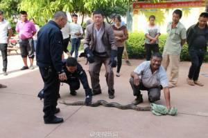 """ชาวบ้านแห่ชม """"พญางูหลาม"""" ยาวหลายเมตร อายุร่วมร้อยปี ในยูนนาน (ชมภาพ)"""