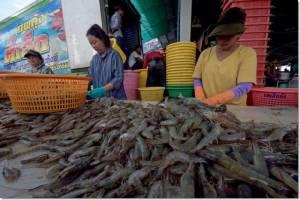 """In Pics : กลุ่ม ส.ส.สหรัฐฯ กดดัน """"เลิกซื้อ"""" กุ้งแช่แข็งจากไทย หลังสุดทน!! ข่าวสาวพม่านั่งปอกกุ้งจนแท้งตกเลือดฉาวไปทั่วโลก"""