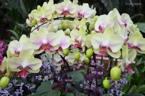 """ดอกไม้งามละลานตา ณ """"ดาษดาแกลเลอร์รี่"""" ชมกล้วยไม้ฟาแลนนอฟซิสหายากและสายพันธุ์อื่นๆ นับหมื่นต้น!!"""