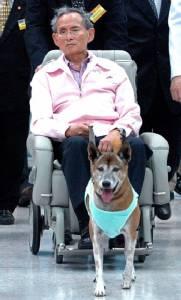 Thai king's favourite dog dies, days after 'insult' arrest