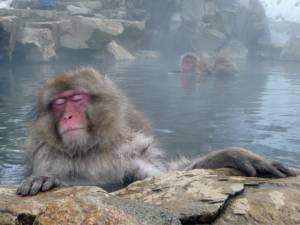 ญี่ปุ่น กับ ลิง