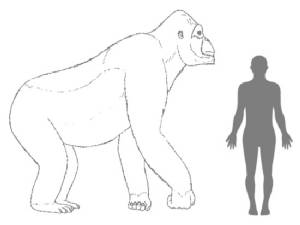 Why the real King Kong became extinct