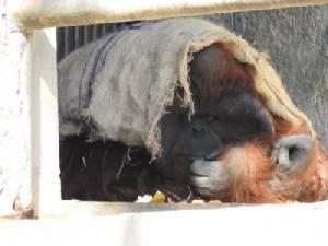 หนาวจัด! หวั่นสัตว์ป่วยสวนสัตว์เชียงใหม่ระดมเต็มที่ให้ความอบอุ่น