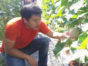 """สวนผักสวัสดีเมืองตรังเปิดประมูลผลปิศาจ """"โกมุ โกมุ"""" จากการ์ตูนดังราคาพุ่งกระฉูด"""