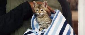 KEANU หนังแอ็คชั่นสุดแบ๊วเขย่าหัวใจทาสแมว