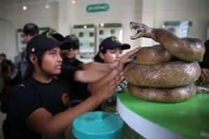 Snake museum in Peru