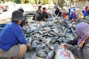 อากาศหนาวทำปลากระชังตายกว่า 400 ตัน มูลค่ากว่า 26 ล้าน
