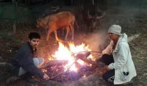 หวั่นแข็งตาย ชาวบ้านต้องก่อไฟไล่หนาวให้วัว-ควาย