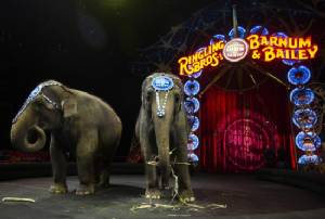 Youngest elephant at famed US circus dies