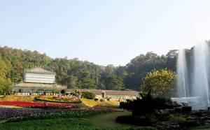 """สำรวจธรรมชาติบนยอดไม้ ชมดอกไม้งามสะพรั่ง ที่ """"สวนพฤกษศาสตร์สมเด็จพระนางเจ้าสิริกิติ์"""""""