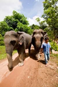 คนรักสัตว์ยิ้ม! ปี 58 สัตว์ 19 ล้านชีวิตทั่วโลกมีชีวิตดีขึ้น