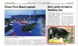 ชัวร์หรือมั่วนิ่ม? ผู้เชี่ยวชาญพม่าสงสัยแพนด้าแดงในมัณฑะเลย์ที่แท้อาจเป็นหมีหิมาลัย