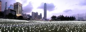 """""""สวนดอกกุหลาบเรืองแสง"""" แห่งฮ่องกง ความงดงามอันน่าตื่นตาตื่นใจ"""