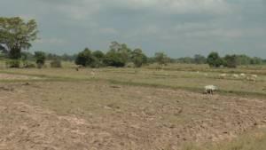 บุรีรัมย์ประกาศภัยพิบัติแล้งแล้ว 3 อำเภอ พืชเกษตรเสียหาย 9,300 ไร่