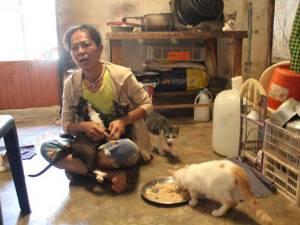รันทด! ป้าสตูลใจบุญเลี้ยงหมาแมวจรจัดนับร้อยไร้รายได้ วอนผู้ใจบุญซื้ออาหารสัตว์ช่วยเหลือ