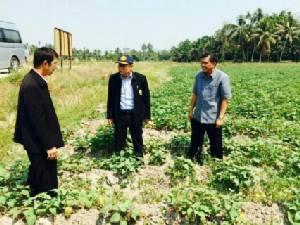 ผู้ตรวจ ก.เกษตรฯ ยกเกษตรกรตาขันปลูกพื้นน้ำน้อยเป็นโมเดลนำร่อง