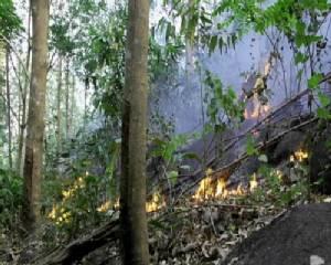 ไฟป่าบนเขามะขามลุกลามไหม้สวนยางของชาวบ้านได้รับความเสียหาย