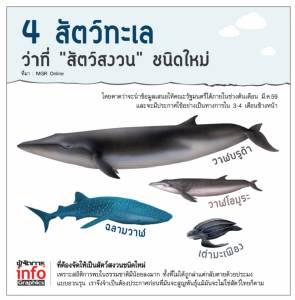 """4 สัตว์ทะเลว่าที่ """"สัตว์สงวน"""" ชนิดใหม่  วาฬบรูด้า-วาฬโอมูระ-ฉลามวาฬ-เต่ามะเฟือง"""