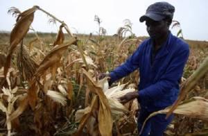 """สหประชาชาติเผย 34 ชาติทั่วโลกยังผลิตอาหาร """"ไม่พอเลี้ยง"""" ประชากร"""