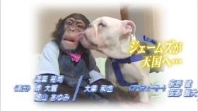 """สุดเศร้า """"เจมส์"""" แห่งขำกลิ้งลิงกับหมาเสียชีวิตแล้ว"""