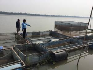 ประมงมุกดาหารแนะหยุดเลี้ยงปลากระชังน้ำโขง เสี่ยงตายหลังจีนปล่อยน้ำ